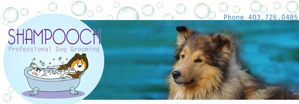 Shampooch Professional Dog Grooming